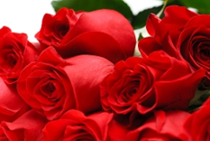 wholesale flowers, wholesale, wholesale roses, bulk flowers, flower, Flowers Direct, bridal flowers