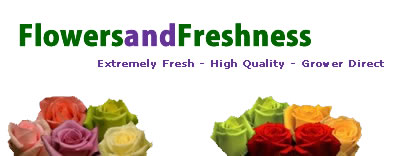 Wedding Bouquets Flowers, Wholesale Flowers - Flowers And Freshness